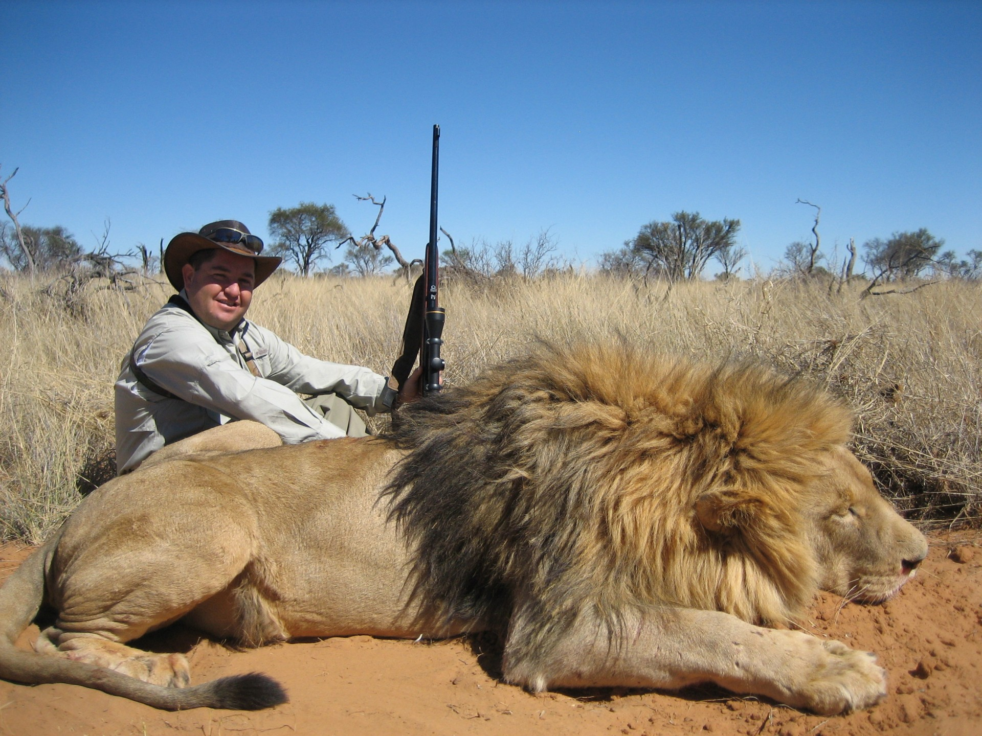 the african lion trophy hunting and Many folks, at least among the conservation-minded, seem to agree that trophy hunting isn't exactly a good model of animal welfare but many also acknowledge that it can be, if executed properly and with oversight and strict quotas, a useful wildlife management tool.