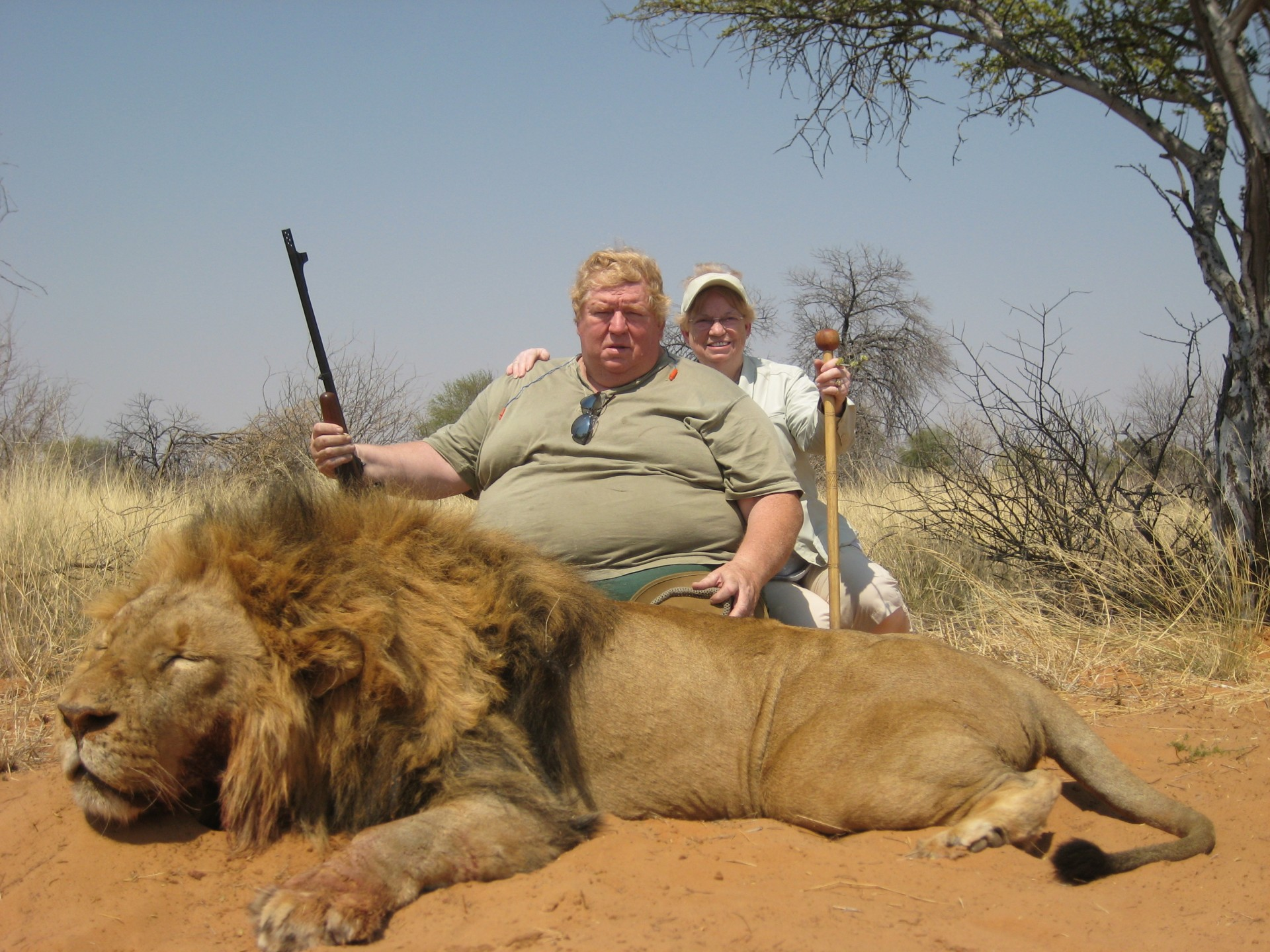 the african lion trophy hunting and United states - trophy hunting elephants and lions  with lion hunting trophy importation being permitted from   is trophy hunting helping save african.